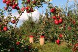Devlet Destekli Tarım Sigortaları 160x107 - Devlet Destekli Ürün Sigortası TARSİM Avantajları